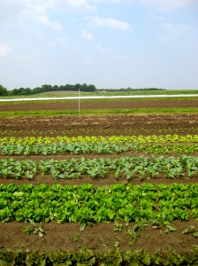 Come See Our Lettuce Grow!