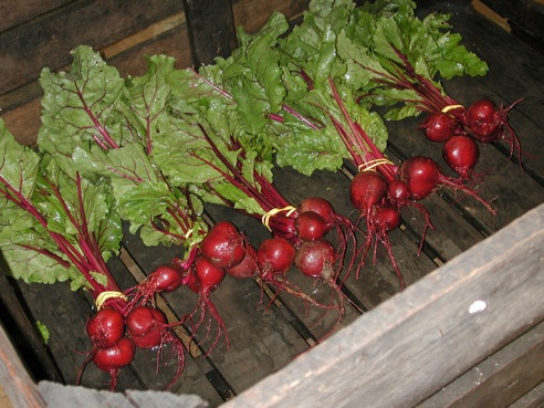 Do you like our beets? Our beets like you.