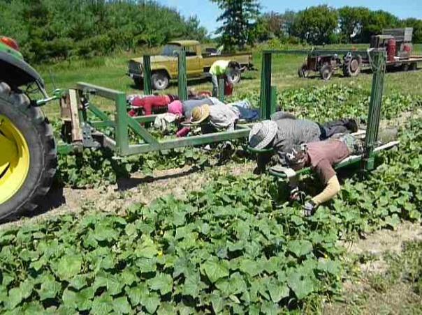 Harvest Platform