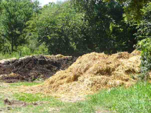 Some of the ingredients for our compost piles: straw (foreground) and chopped cover crops
