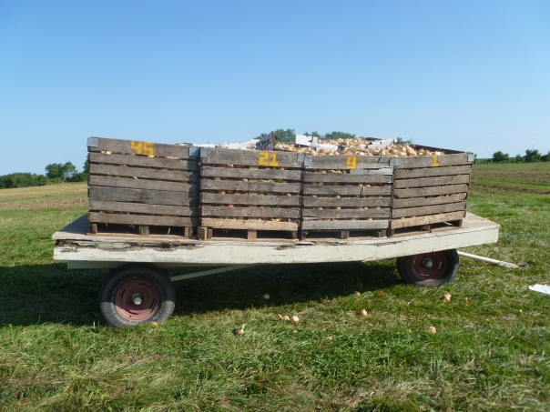 """I need a chiropractor,"" the wagon said. ""I'll just sit right here until these 10,000 lbs of onions are unloaded."""