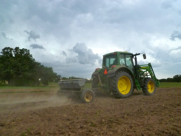 Pollo (Eduardo) Casique works late seeding forage peas to boost fertility in our 2014 vegetable fields. Twenty minutes after he made this pass with the grain drill, the rain came pounding down.This is the 29th field he seeded on this Friday. Next year, it will grow your spring beets and cabbage.