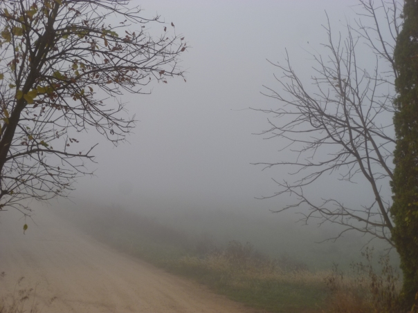 When the air is cold and the ground is warm, the farm is shrouded in mystery