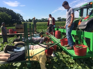 Primo (left) and Pollo (not shown) upgraded our cucumber harvester with a walkway and harvest bucket hangers, cutting cucumber harvest time almost in half. Hovering over the vines, instead of trampling them to find the cucumbers, results in longer lasting vines and greater yields, plus, it's easier on or crew.