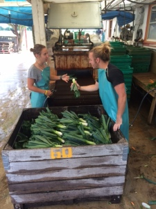 Emily and Jay Discuss Food Security Leeks