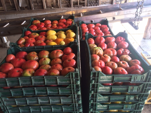 Columns of Heirloom Tomatoes