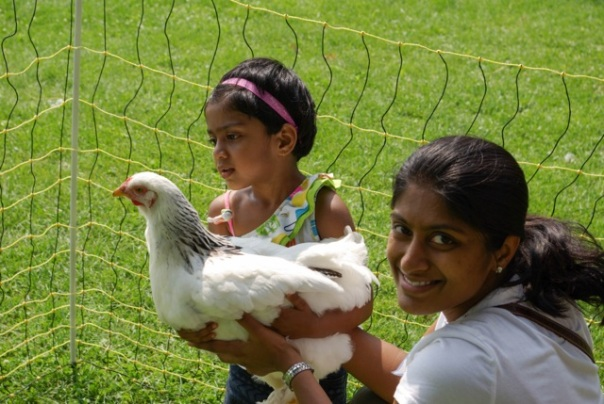 Chicken Happiness