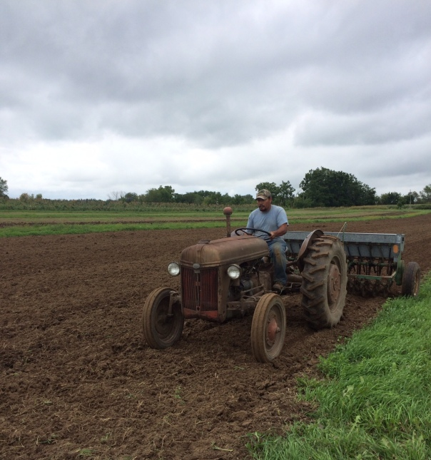 Pollo races the rain as he seeds fall cover crops (peas)