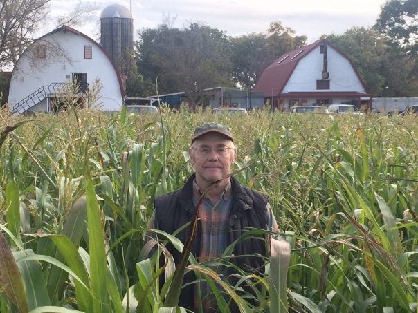 Farmer John revels in multi-year cover crops- sudan grass, tillage turnips, clover, alfalfa and timothy